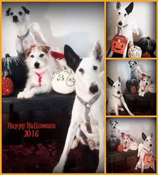 halloween dog costume photo contest winners - third prize