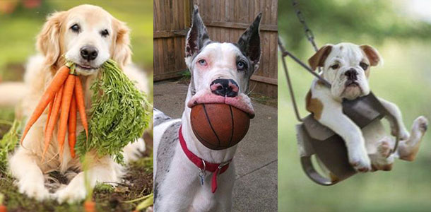 These happy, smiling dogs and more can be found on Pinterest.