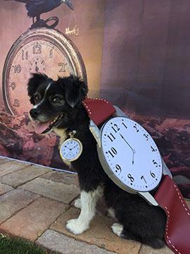 halloween dog costume photo contest winners - second prize