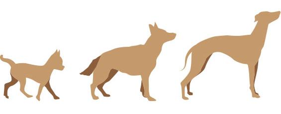 calorie_dogs