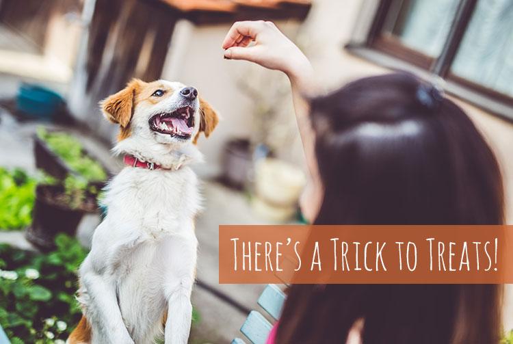 trick_blog