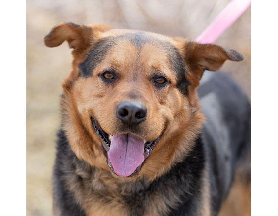 happyhowies_adoptabledog_clyde