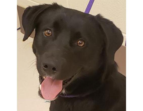 happyhowies_adoptabledog_stormy